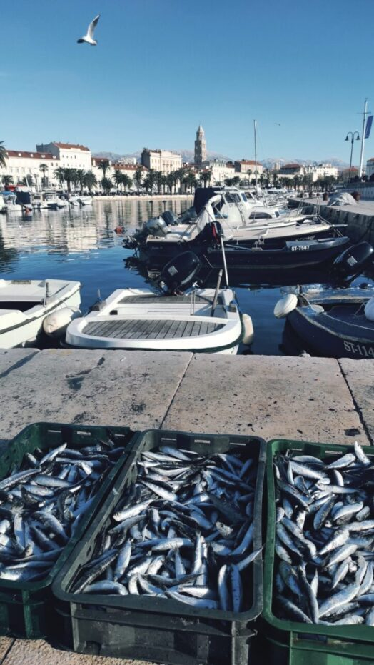 Split Traditional food Croatia sardines