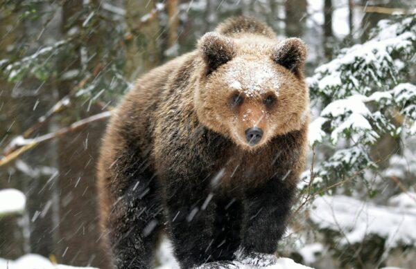 Bears Plitvice story