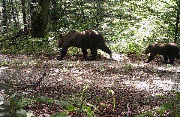 One day tour plitvice bear